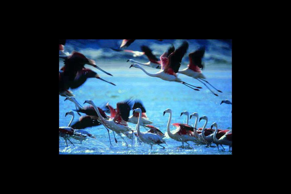 Paracas national reserve , Peru