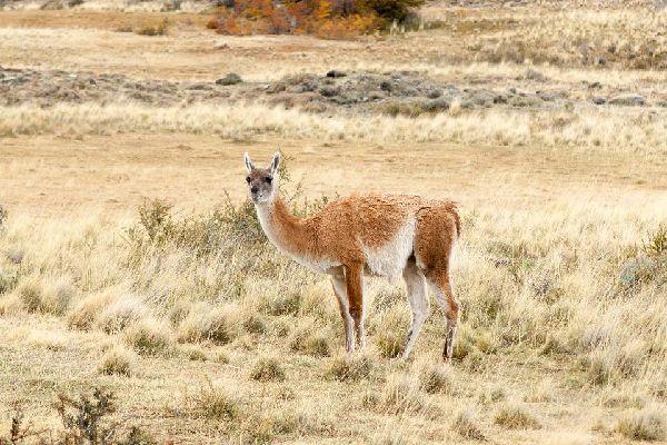 Pampa Galeras , La réserve de Pampa Galeras, Pérou , Pérou