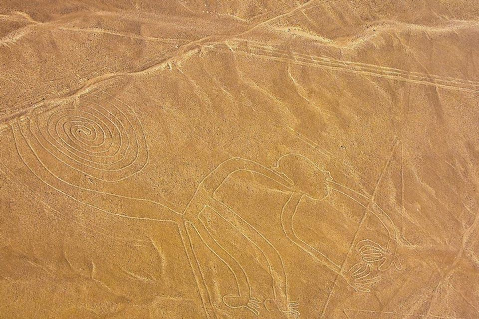 Le linee di Nazca , La Scimmia , Perù