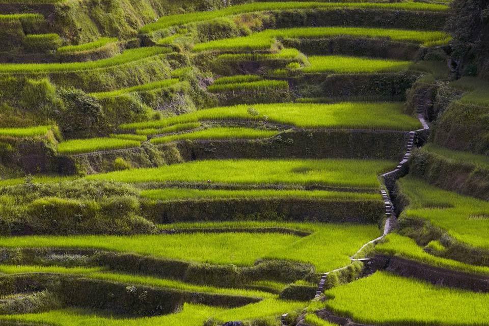 Le risaie di Banaue (Luzon) , La costruzione delle risaie , Filippine