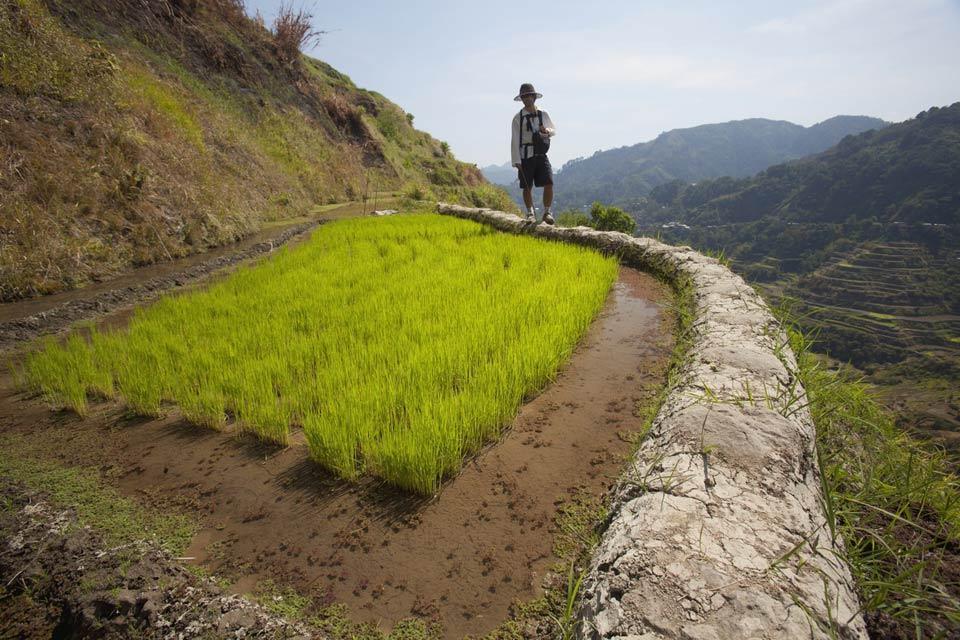 Banaue & Batad rice terraces , The terraces , Philippines