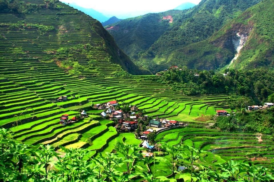 Banaue & Batad rice terraces , The Banaue Rice Terraces , Philippines