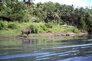 Pagsanjan, or vegetation hell, Pagsanjan, Landscapes, Philippines
