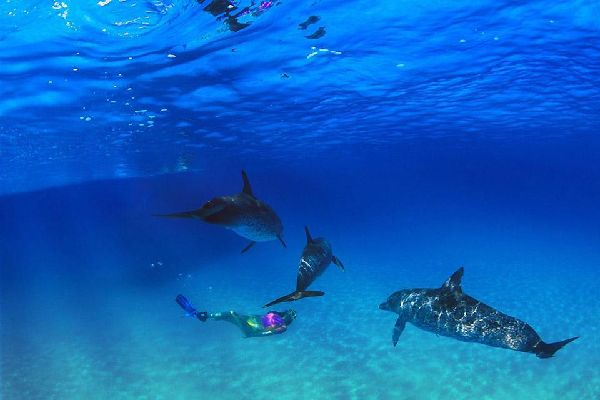 Diving , Diving in the Bahamas , Bahamas
