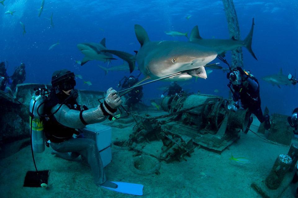 Le immersioni , Profondità blu , Bahamas