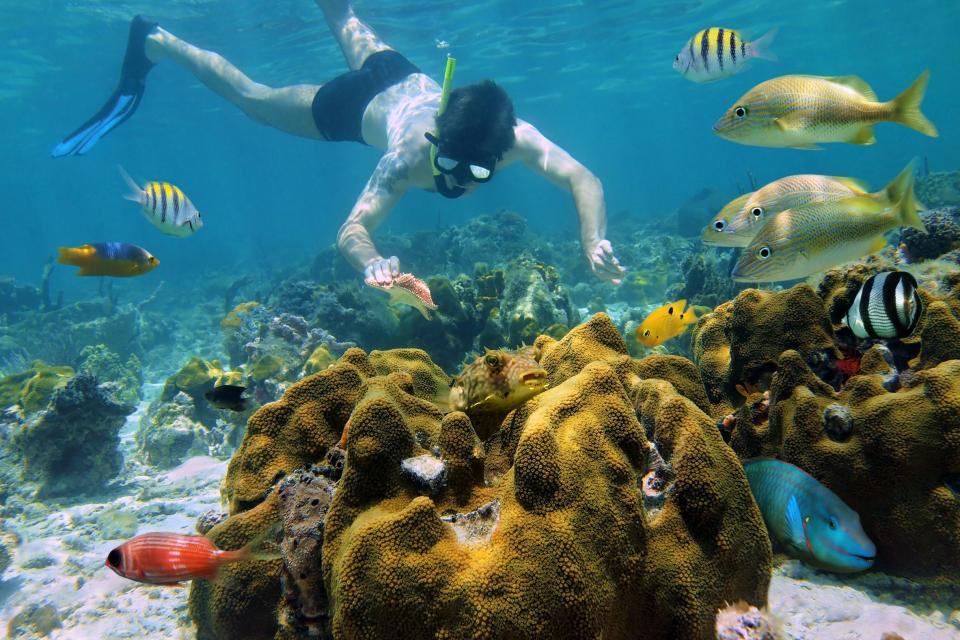 Le immersioni , Gli squali delle Bahamas , Bahamas