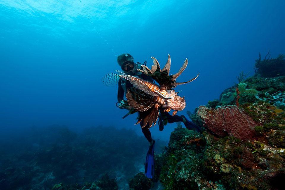 Le immersioni , Le specie delle Bahamas , Bahamas