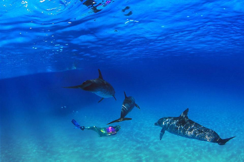 Le immersioni , Immersioni alle Bahamas , Bahamas