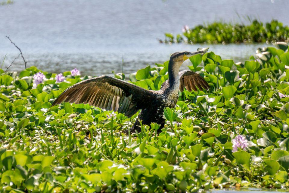 La posizione del parco, Safari nelle paludi di Agusan Marsh, La fauna e la flora, Filippine