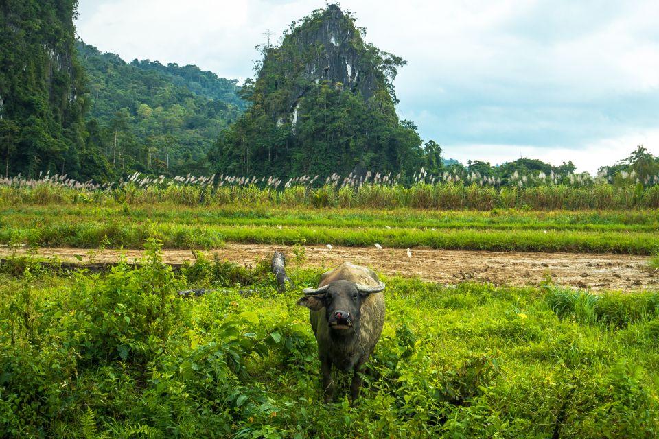 Un honor para las islas, Palawan y su fauna, Fauna y flora, Filipinas