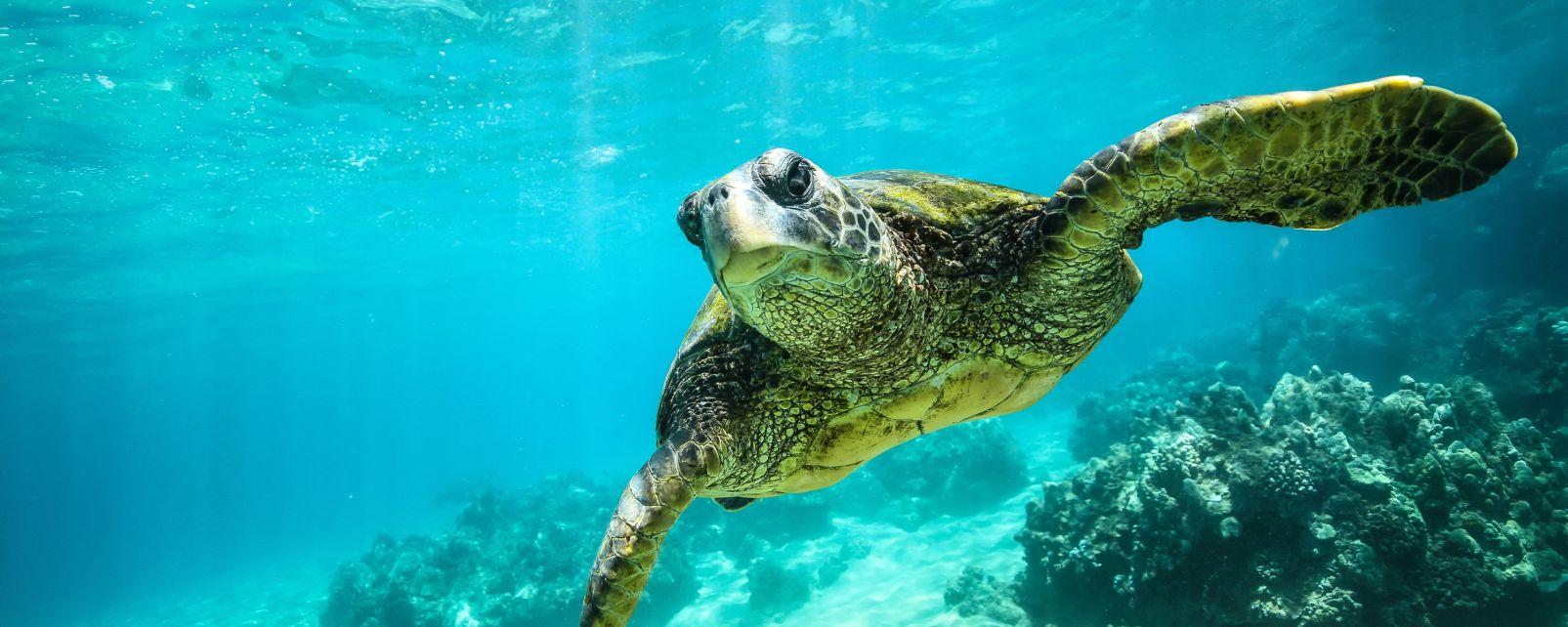 La faune et la flore, philippines, asie, faune, sous-marin, animal, poisson, mer, océan, baliste