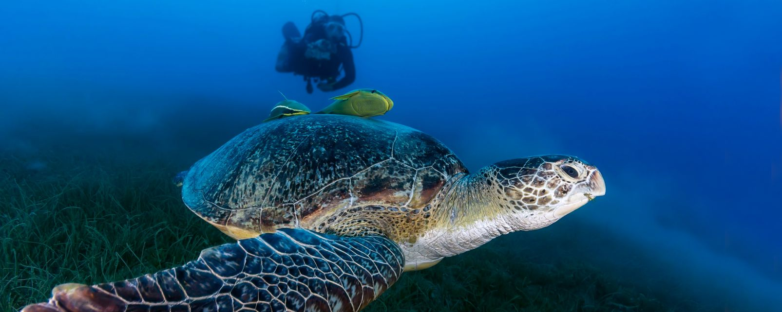 The best diving sites, A safari in Agusan Marsh, The fauna and flora, Philippines