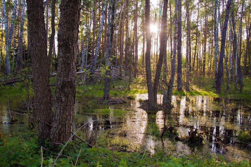 Der Nationalpark von Biebrza , Polen