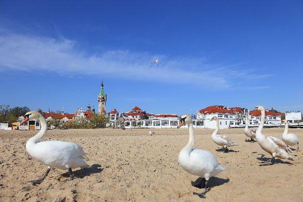 Sopot e Gdynia , Polonia