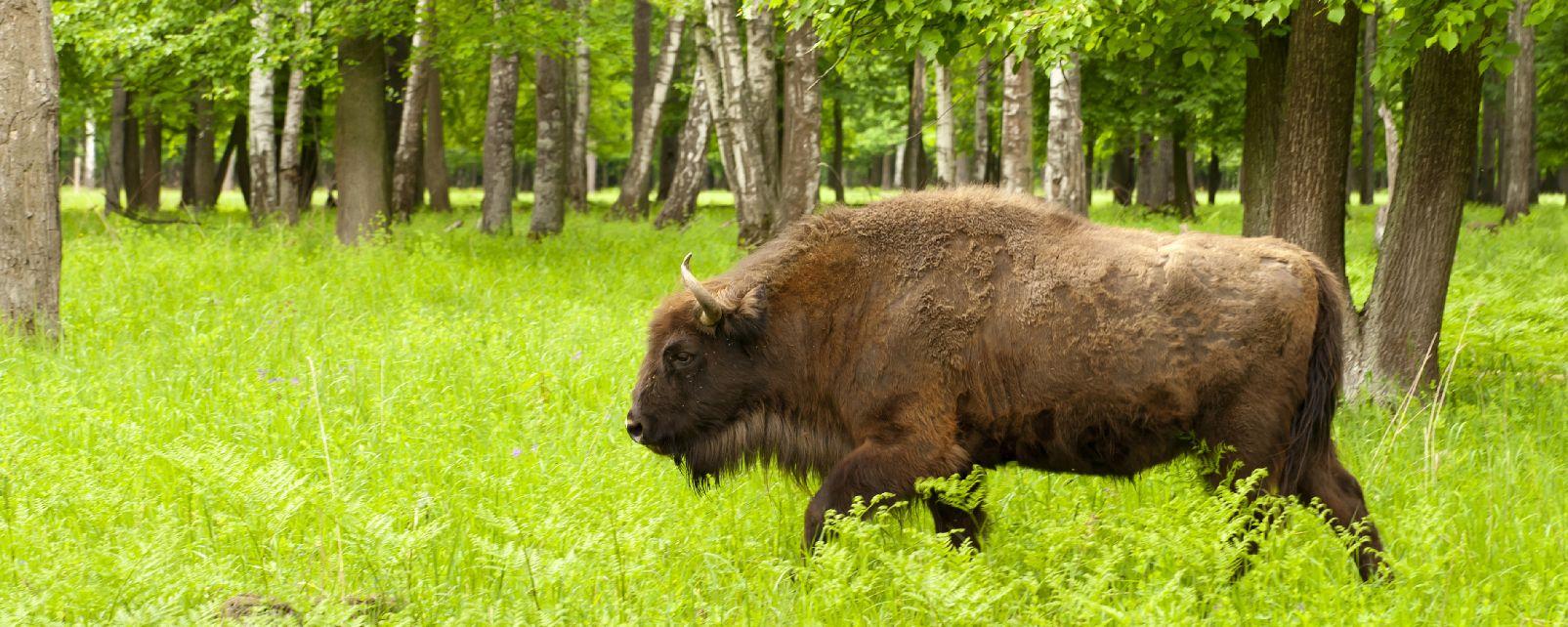 Vom Ausstreben bedrohte Arten , Vom Aussterben bedrohte Arten , Polen