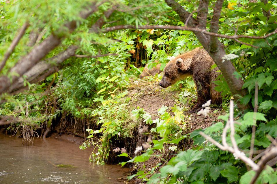 Vom Ausstreben bedrohte Arten , Polen
