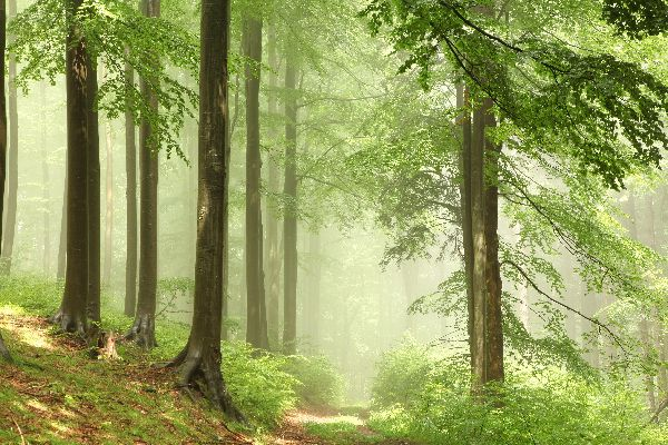 Le foreste , I boschi , Polonia