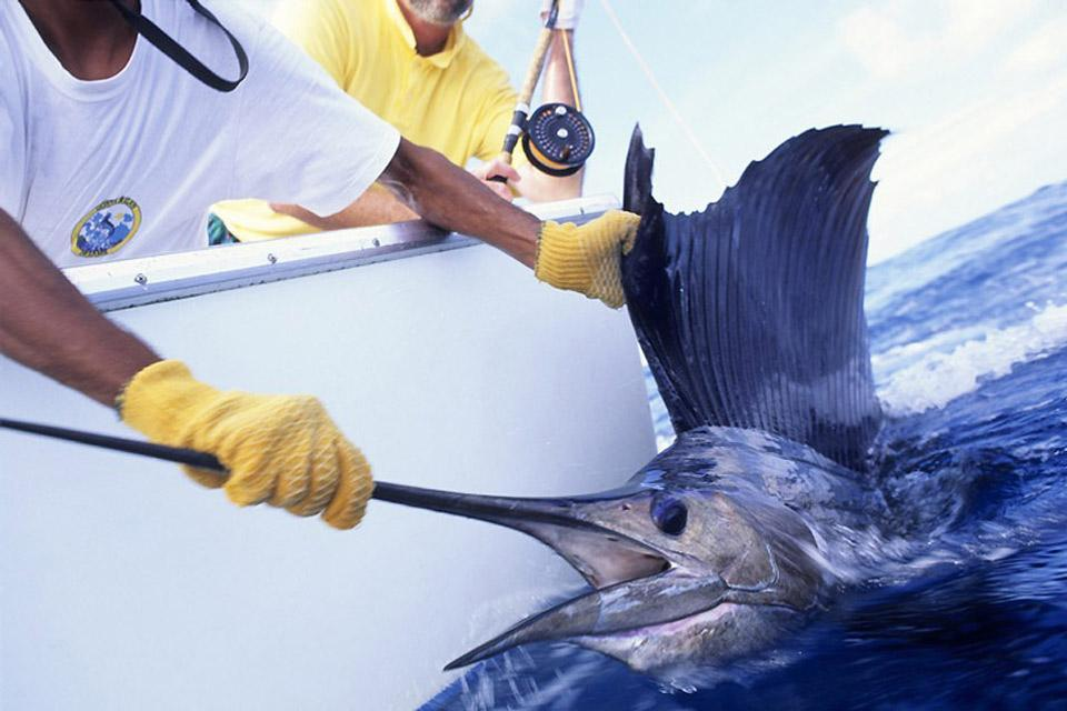 Sport fishing , Fishing in the Bahamas , Bahamas