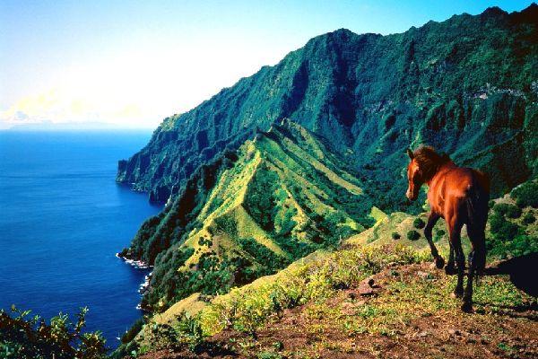Les chevaux , Polynésie