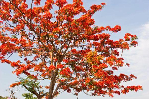 La végétation , Polynésie