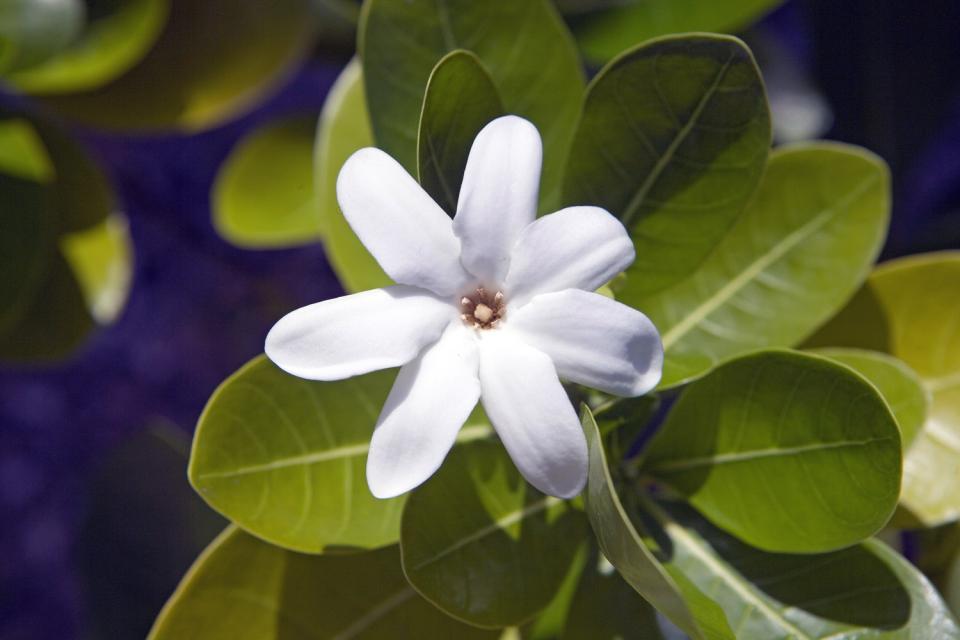 La vegetazione , Polinesia francese