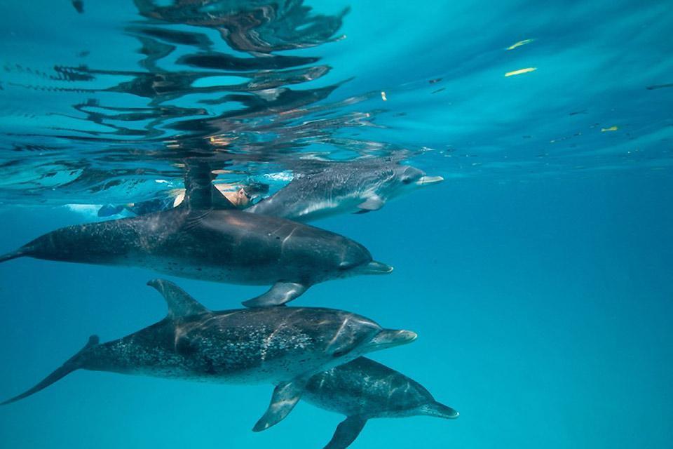 Grand Bahama , Die Delfine der Bahamas , Bahamas
