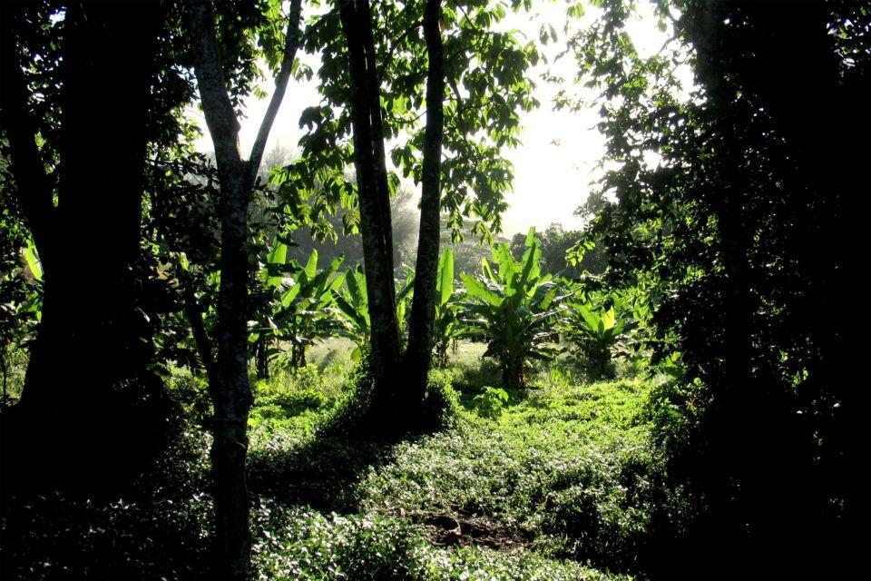 Les paysages, polynésie, tahiti, tahiti nui, grande tahiti, océanie, france