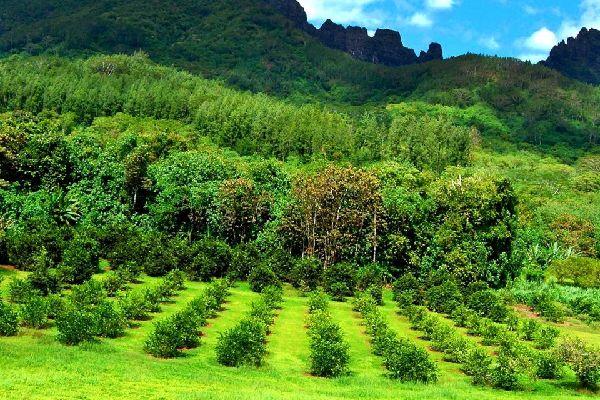Moorea , die Plantagen , Moorea , Die Plantagen , Polynesien
