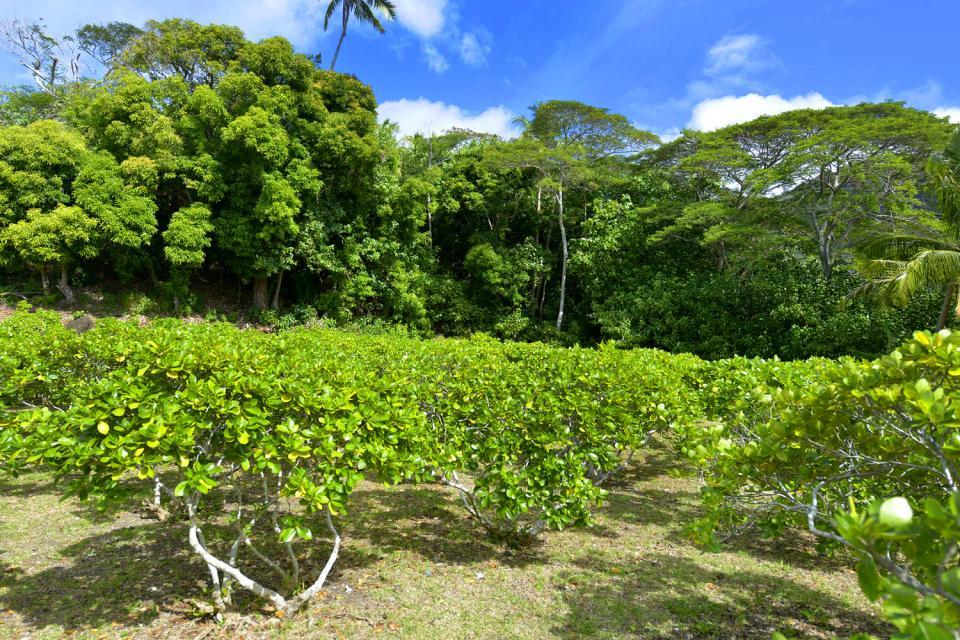 I giardini botanici , Polinesia francese