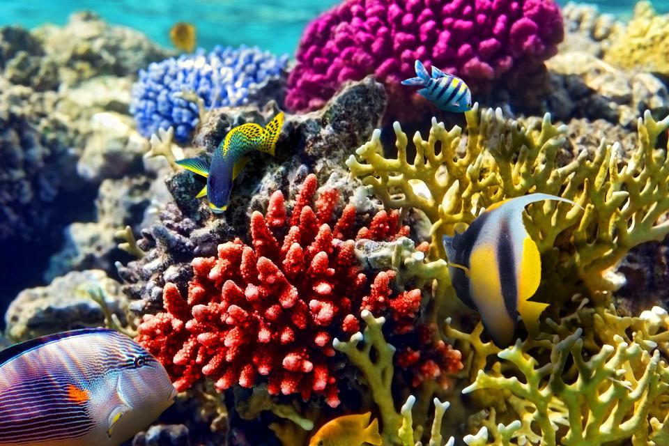 La fauna delle lagune , Polinesia francese