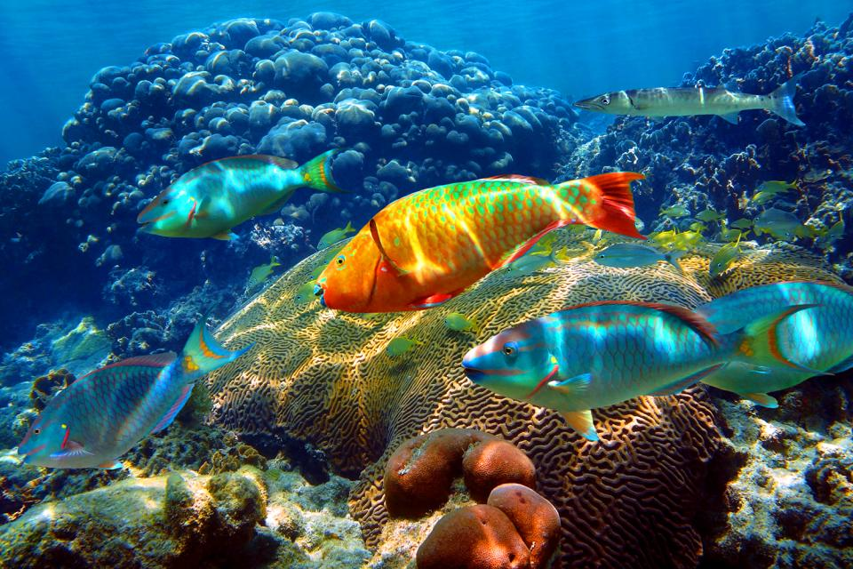 La Faune Des Lagons Tahiti Et L Archipel De La Soci 233 T 233 Polyn 233 Sie