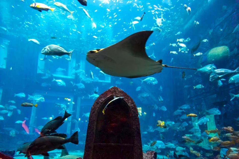 Gli acquari , Polinesia francese