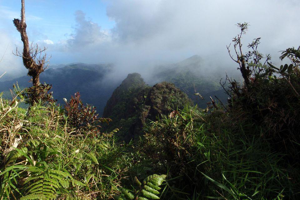 La foresta di El Yunque , Porto Rico