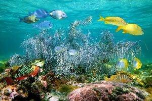 Las Bimini , El viejo y el mar , Bahamas