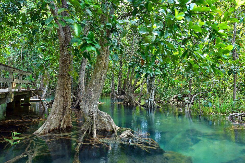Bosque Estatal de Pinones , Puerto Rico