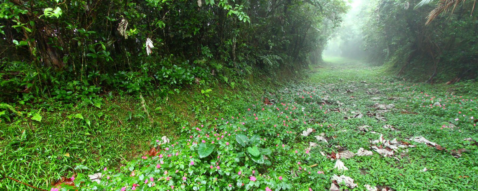 Carite national forest , Puerto Rico