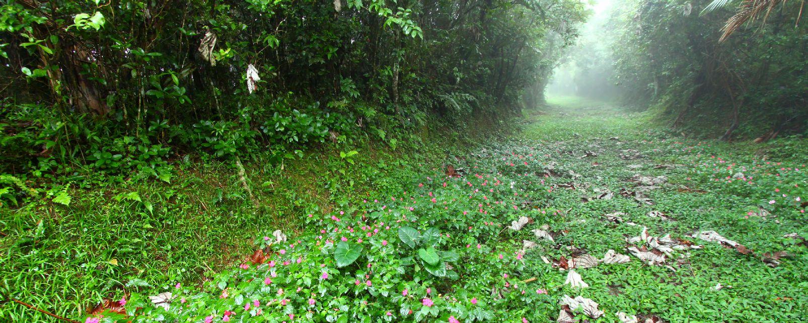 La Forêt nationale de Carite , Porto Rico