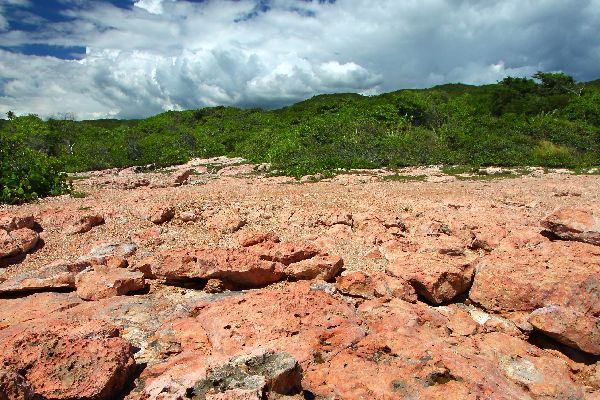 Guanica national forest , Puerto Rico
