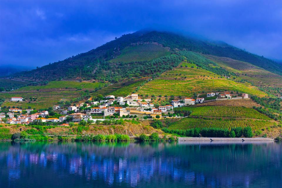 Le nord sauvage , Récolte du raisin dans la vallée du Douro , Portugal