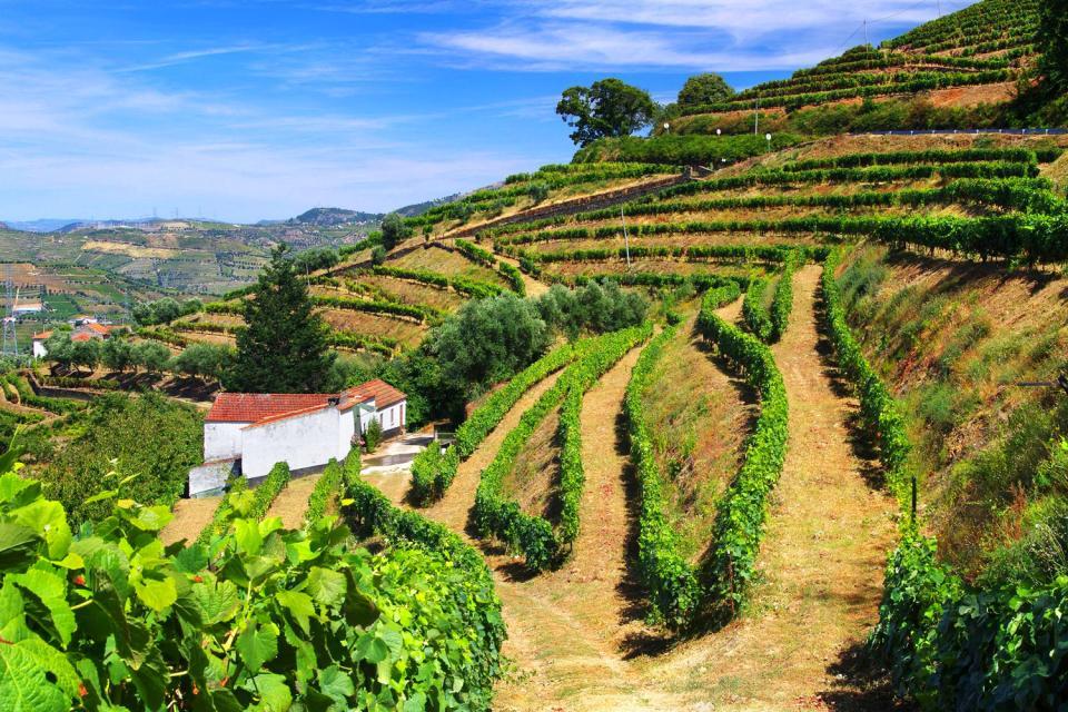 Le nord sauvage , Terrasses de vignobles, région de Minho , Portugal
