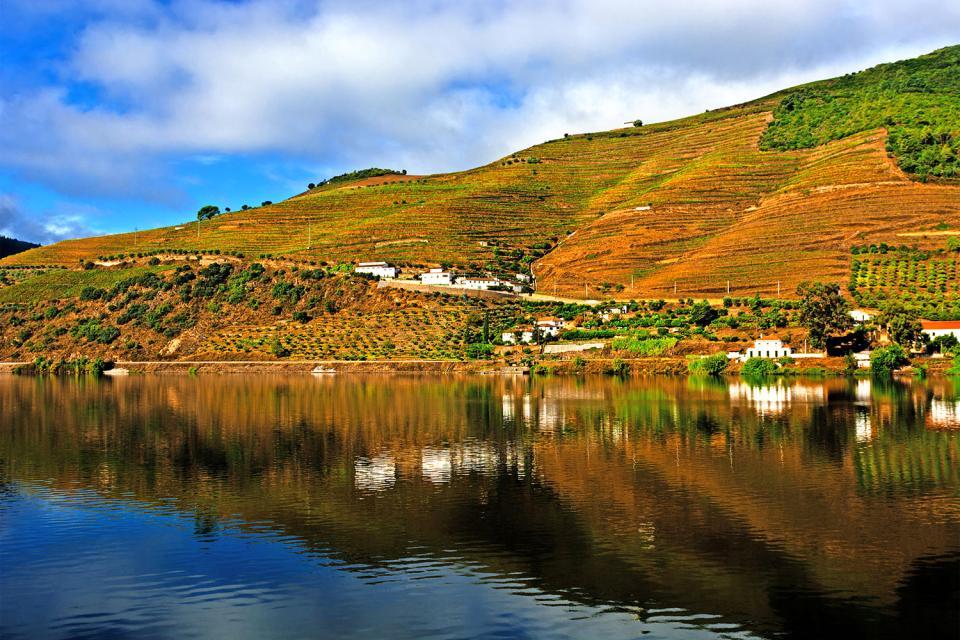 Le nord sauvage , Panorama sur le dédale des vignobles , Portugal