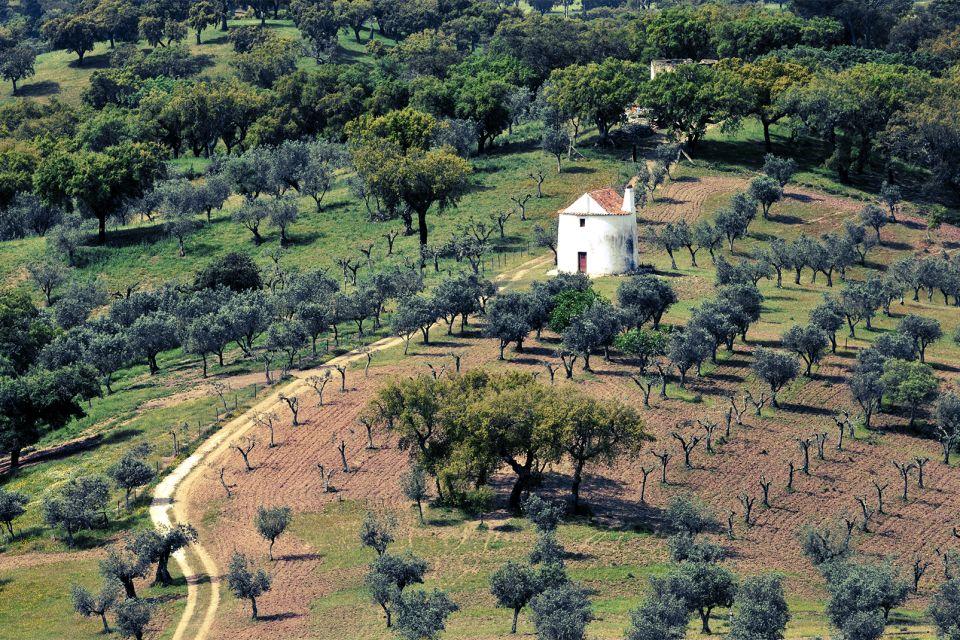 Les paysages, Alentejo Portugal Culture agriculture arbre chêne-liège olivier flore campagne.