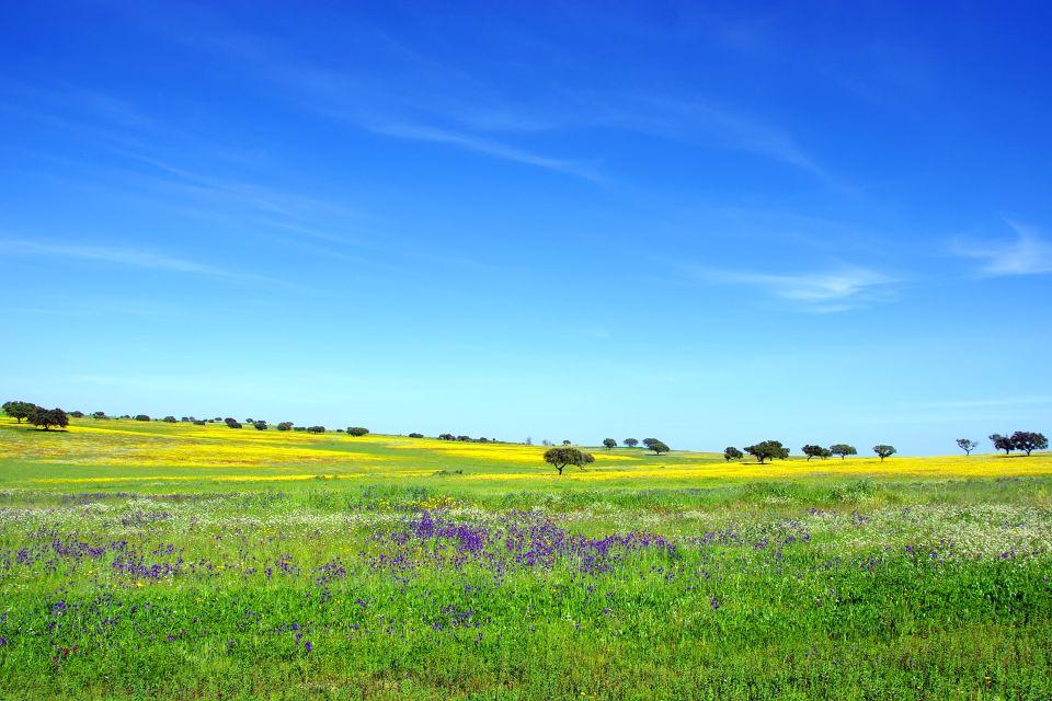 Les paysages, Alentejo Portugal prairie flore fleur printemps arbre nature.