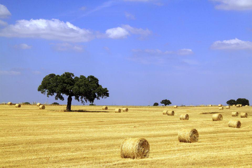 Les paysages, Alentejo portugal europe agriculture récolte blé arbre.