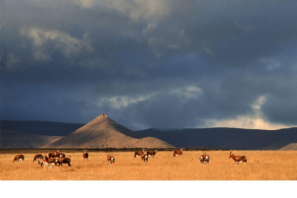Les paysages, cap-occidental, western cap, afrique, afrique du sud, parc, karoo, antilipe, faune, mammifère