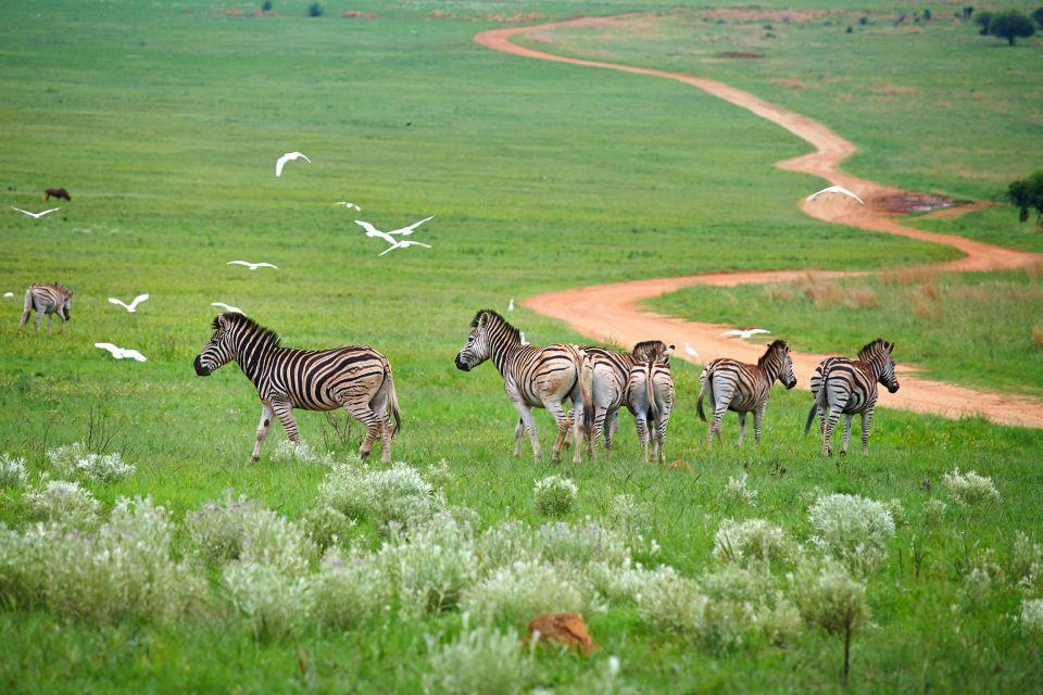Les paysages, Afrique du Sud, afrique, zèbre, animal, faune, mammifère, équidés, karoo, parc national