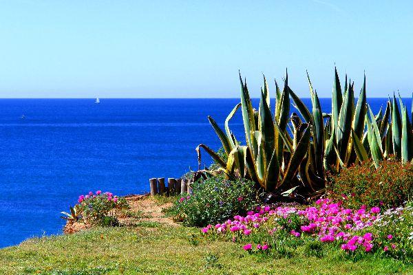 La flore de l'Algarve , Le bout du monde , Portugal