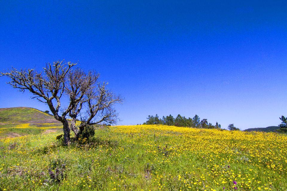 La flora dell'Algarve , Precoce fioritura primaverile , Portogallo