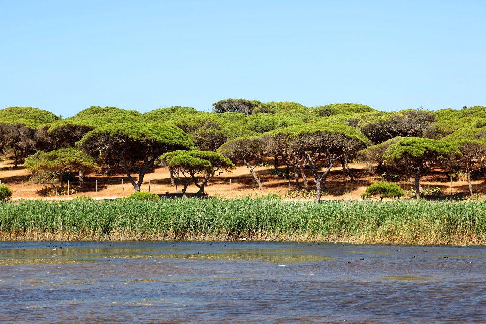 La flora dell'Algarve , Foresta di pini , Portogallo