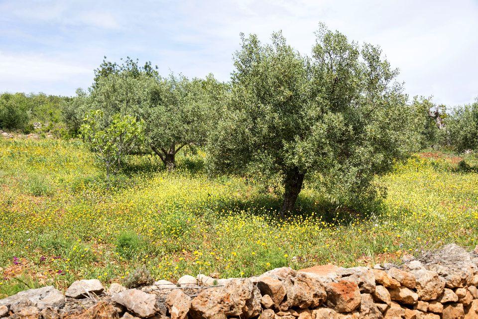 La flora dell'Algarve , In coppia è meglio , Portogallo
